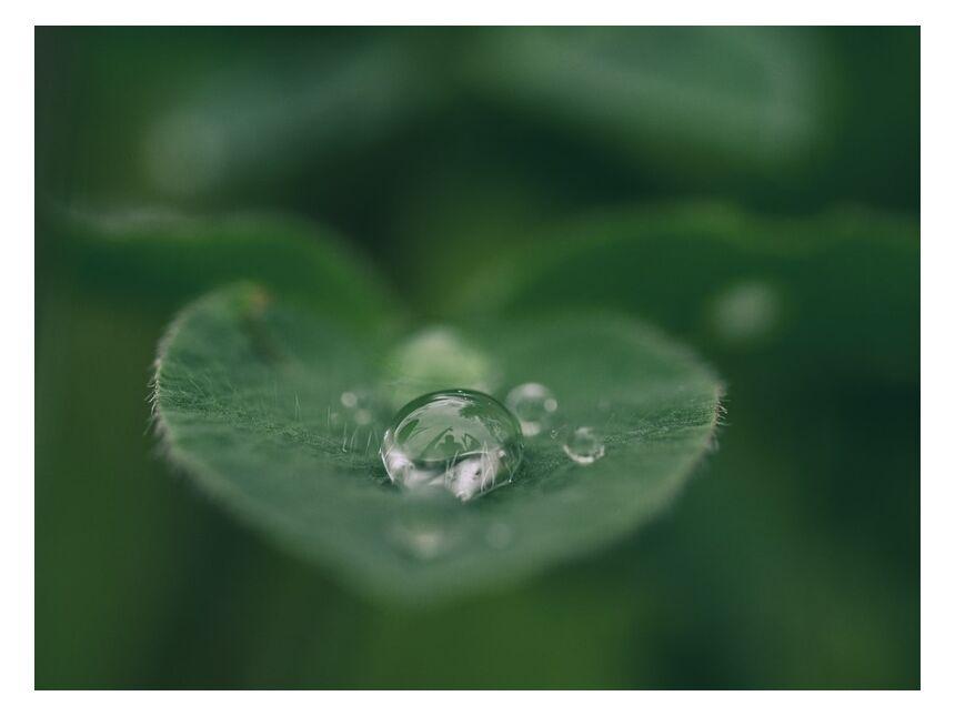 Pooling Water On Leaf